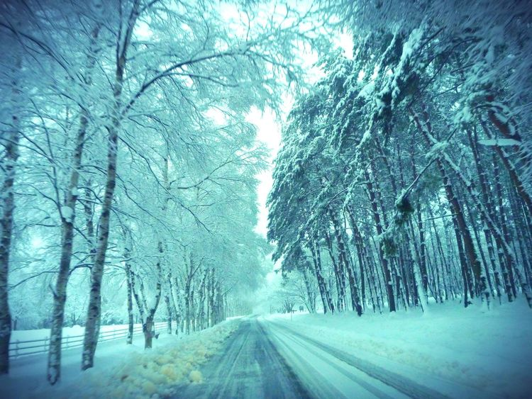 Snow covered trees line a quiet country road. Beauty In Nature Cold Temperature Diminishing Perspective Landscape Nature No People Non-urban Scene Road Season  Snow Tranquil Scene Tranquility Tree Treelined Weather Winter Matsuo Yoriki Birch Forest Ultimate Japan On The Way