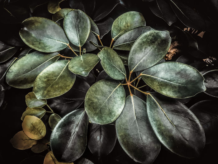 Freshness Outdoors Green Color Directly Above Fragility Beauty In Nature Vulnerability  Close-up Nature Plant Part Leaf High Angle View Leaves Dry Day Plant No People Growth Flower Botany