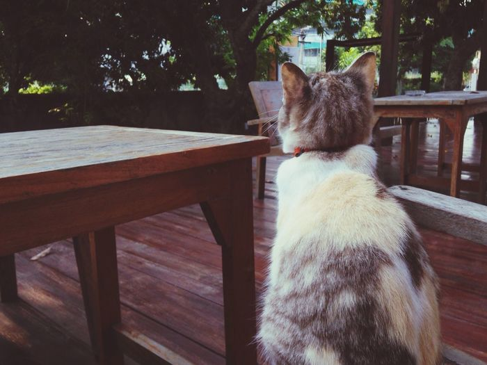 Watch out Nan Thailand The Places I've Been Today Thai Street Cat The EyeEm Facebook Cover Challenge