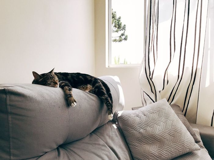 Cat resting on sofa at home