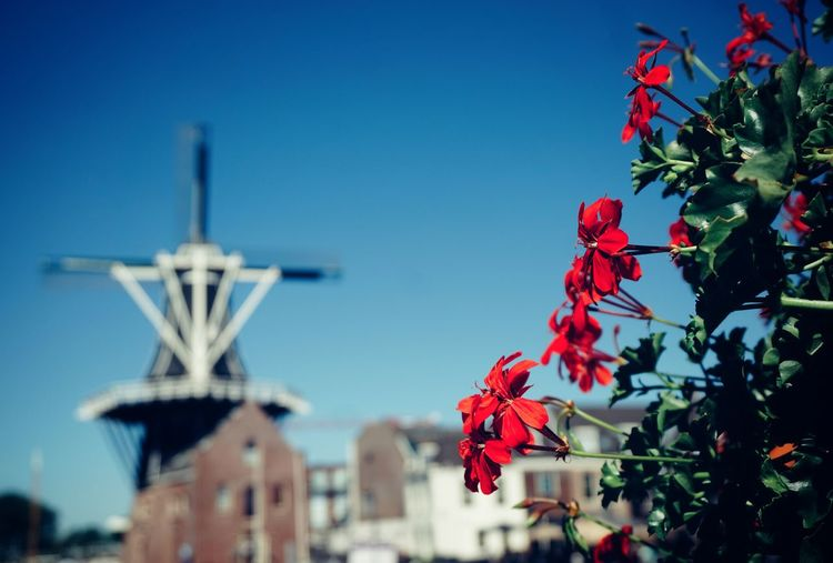 2019 Niklas Storm Juli City Tree Clear Sky Cityscape Red Blue Sky Close-up Building Exterior Blooming Flower Head In Bloom Growing The Architect - 2019 EyeEm Awards My Best Photo