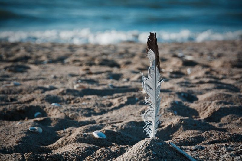 Close-Up Of Feather At Beach