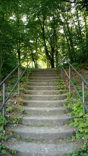 Trees And Nature Tree Steps And Staircases Steps Railing Staircase Green Color Grass Hand Rail