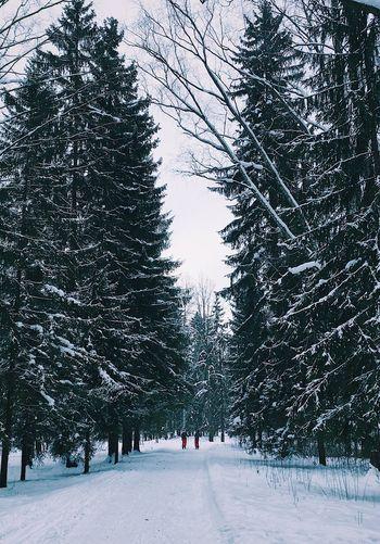 Магия последних снежных дней Tree Winter Cold Temperature Nature Day Outdoors First Eyeem Photo