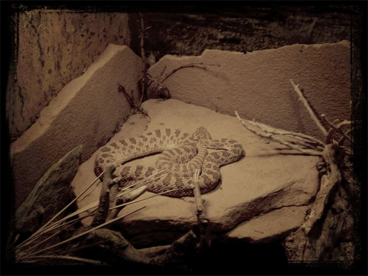 Reptilienmuseum Bodenseeregion