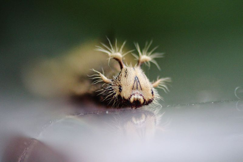 Close-up of caterpillar