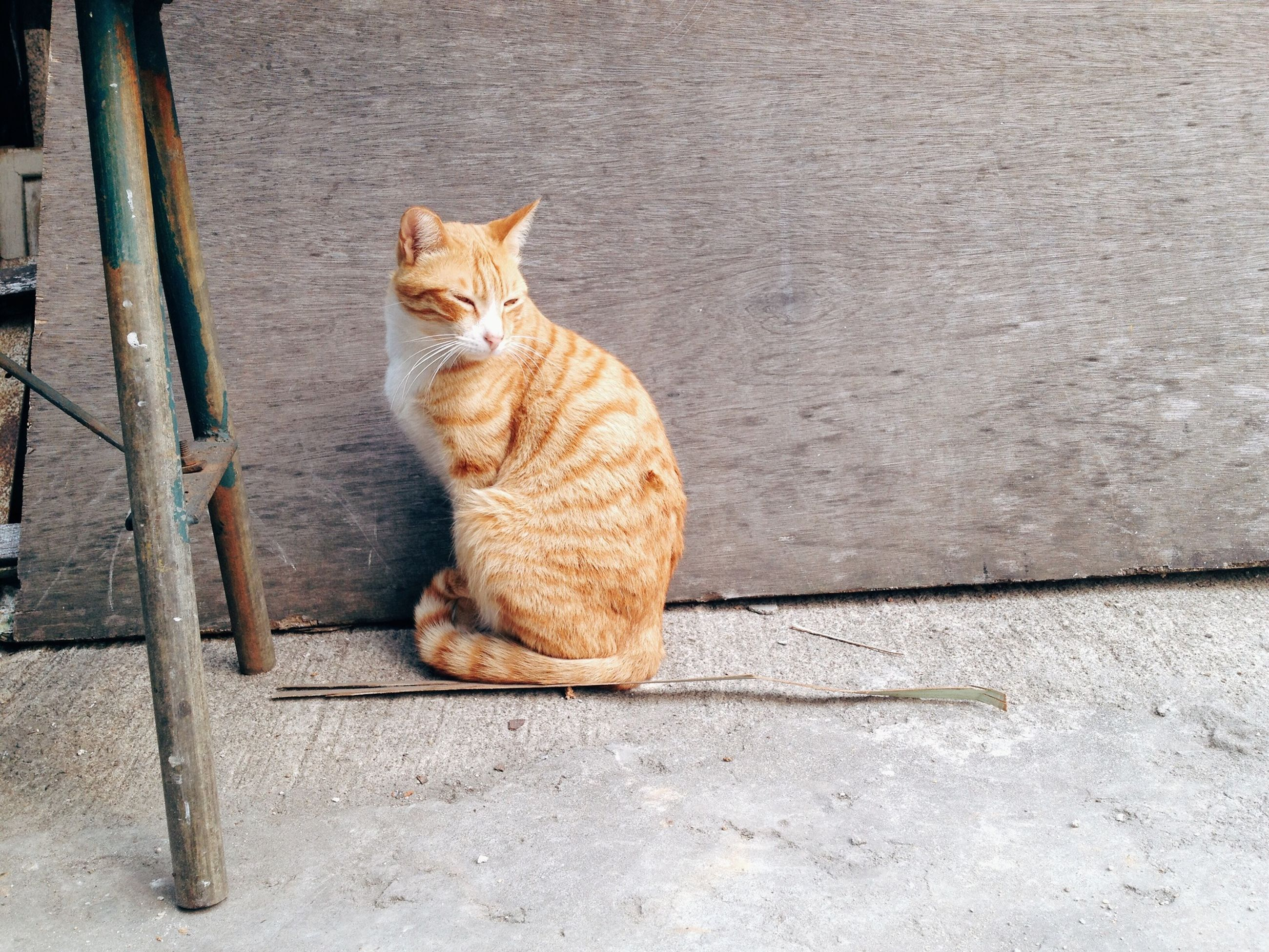 domestic cat, cat, one animal, animal themes, pets, domestic animals, feline, mammal, whisker, relaxation, sitting, full length, portrait, looking at camera, wall - building feature, alertness, tabby, lying down, zoology