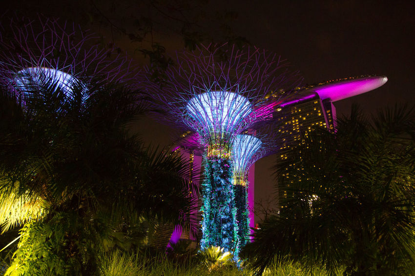 Gardens By The Bay Marina Bay Sands Architecture Arts Culture And Entertainment Built Structure Celebration Celebration Event Decoration Event Firework Firework - Man Made Object Glowing Illuminated Light Low Angle View Motion Nature Night No People Outdoors Plant Purple Sky Tree