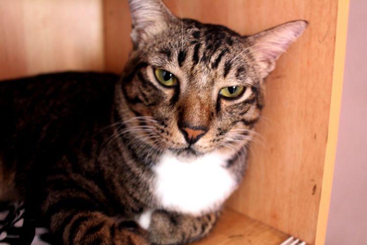 Male cat. Animal Cat Cat Cats Cat Relax Fur Furry Male Cat