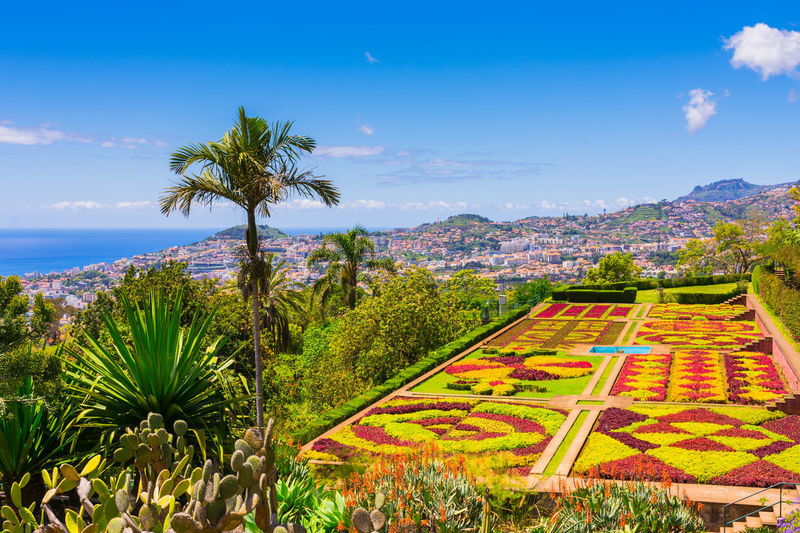 Botanical garden in Funchal, Madeira island, Portugal Landscape Nature Palm Tree Environment Tropical Climate No People Tranquil Scene Idyllic Outdoors Tree Sky Plant Beauty In Nature Madeira Funchal Botanical Garden Growth Cloud - Sky Tranquility Field Plantation Portugal Island Mountain Travel Symetrical Paradise Exotic Colors Outoor Blue Park Spring Summer Cactus Landmark Tourism Touristic Destination Atlantic Ocean Portuguese Green Forest Viwe Famous Place Natural Botany Flora Hill