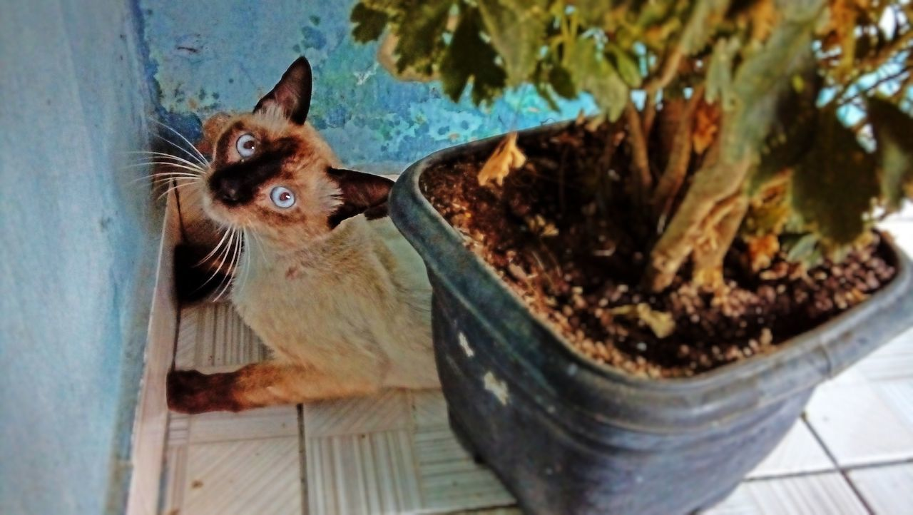 Portrait Of Cat Sitting By Potted Plant And Wall