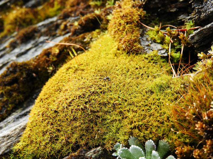 Dolomites Freshness Südtirol Beauty In Nature Close-up Day Dolomites South Tyrol Südtirol Forest Fragility In Nature Gran Pilastro Grass Macro Macro_collection Moss Moss And Lichen Moss Pillow Nature No People Outdoors Sudtirolo Water