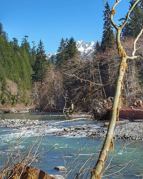 Nothing but blue skies... PNW Photography Landscape Igers_seattle Mountains River Water Trees Upperleftusa Northwestisbest Pnwliving Pnwlife Thatpnwlife Staypnw Getoutside Goexplore PNWonderland Thenwadventure Pnwonderful Spring Nationalforest Petitteckelphoto