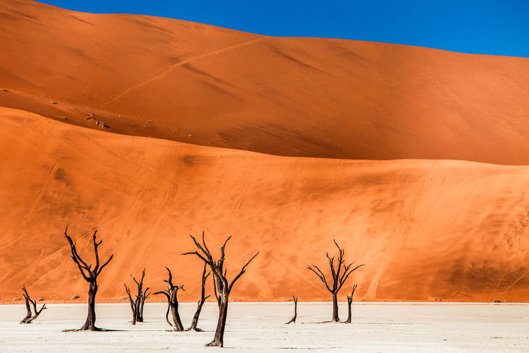 Bare trees on sand against desert