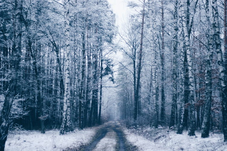 Snow Winter White Forest Trees Nature VSCO Poland