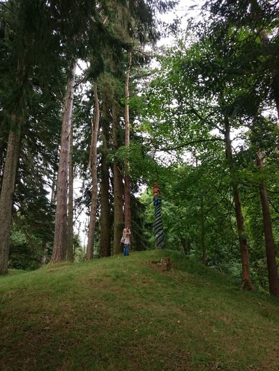 Tree Growth Green Color Forest Low Angle View WoodLand Outdoors Tall - High Tree Trunk Small Taking Photos Of People Taking Photos Portrait No Filter No édit Eyeem Giant Trees Non-urban Scene Park - Man Made Space Angles And Views Snapshots Of Life
