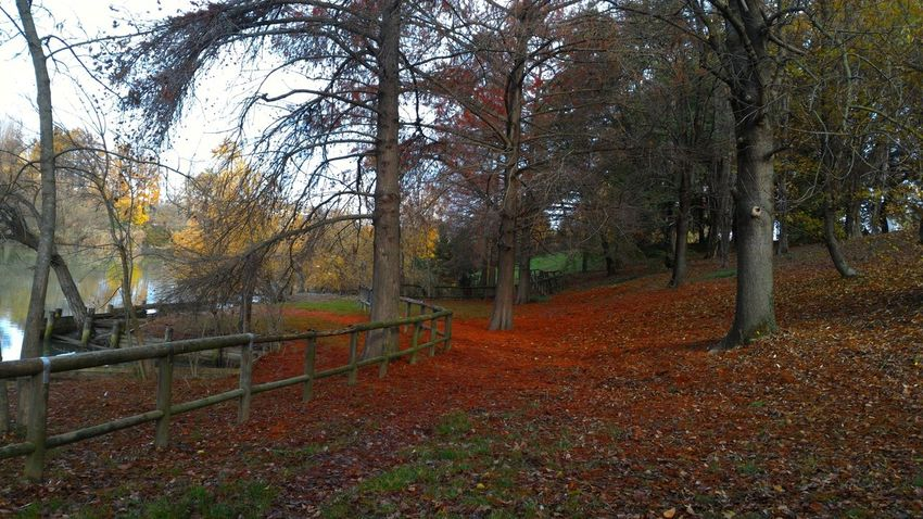Bosco Wood Deep Autumn Autunno  Pieno Alberi Trees November Novembre Leaves Rosso Red Nature Beauty In Nature Outdoors No People Natura Parco Park Lake Lago Umido Humid