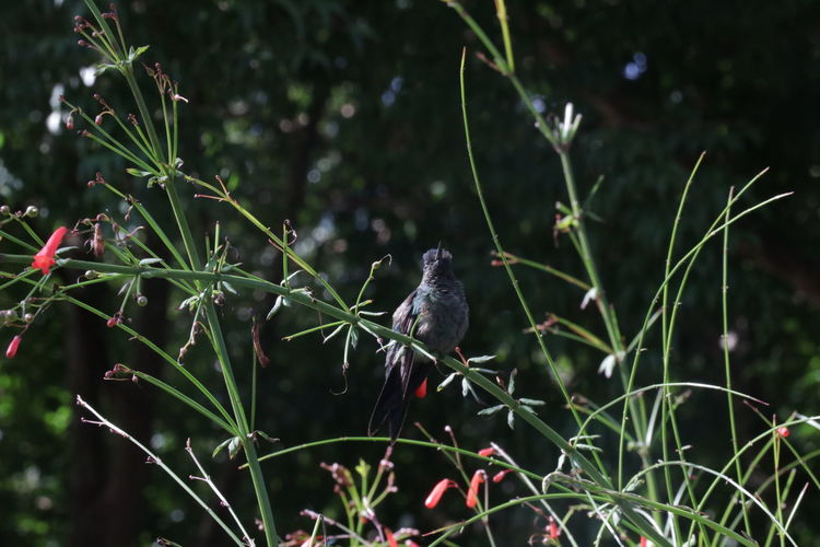 View of bird perching on plant