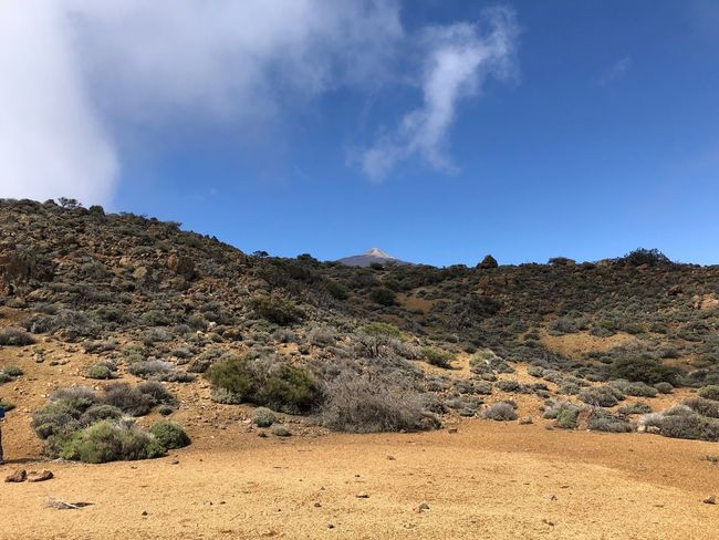 Volcano Teide faaaar away, Tenerife 🇪🇸 Nofilter Mountain Volcano Teide Cloud - Sky Mount Teide Teide National Park Clouds SPAIN Tenerife Sky Tranquility Beauty In Nature Tranquil Scene Cloud - Sky Land Scenics - Nature Nature Plant Landscape Growth Tree Idyllic Mountain