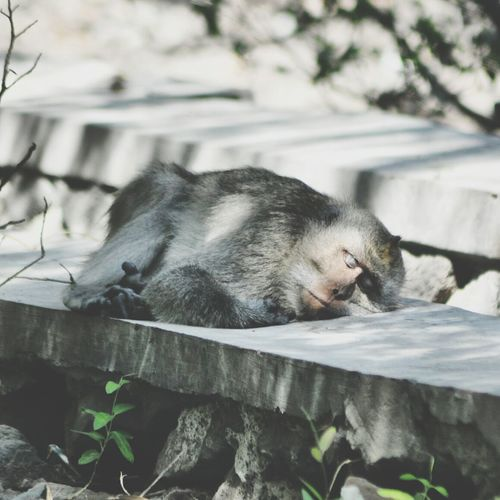 Exhausted monkey, Animals Nature My Happy Place  Getting Inspired