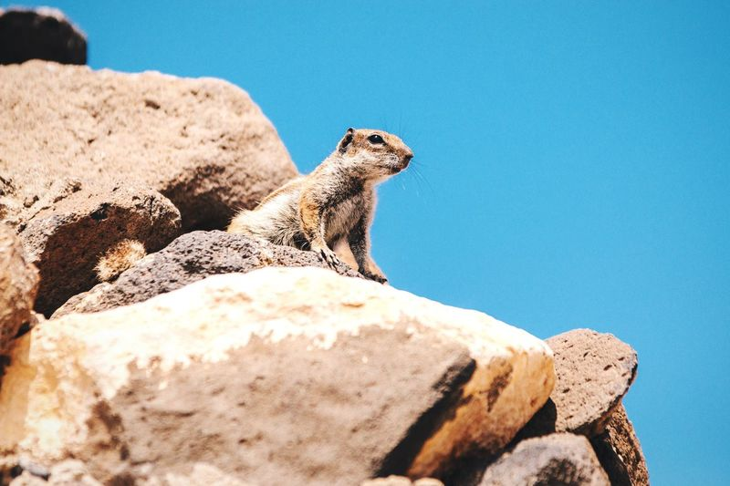 Squirrel On Rock Looking Away Against Clear Sky