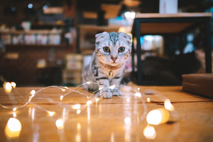Portrait of cat standing by illuminated string light on table