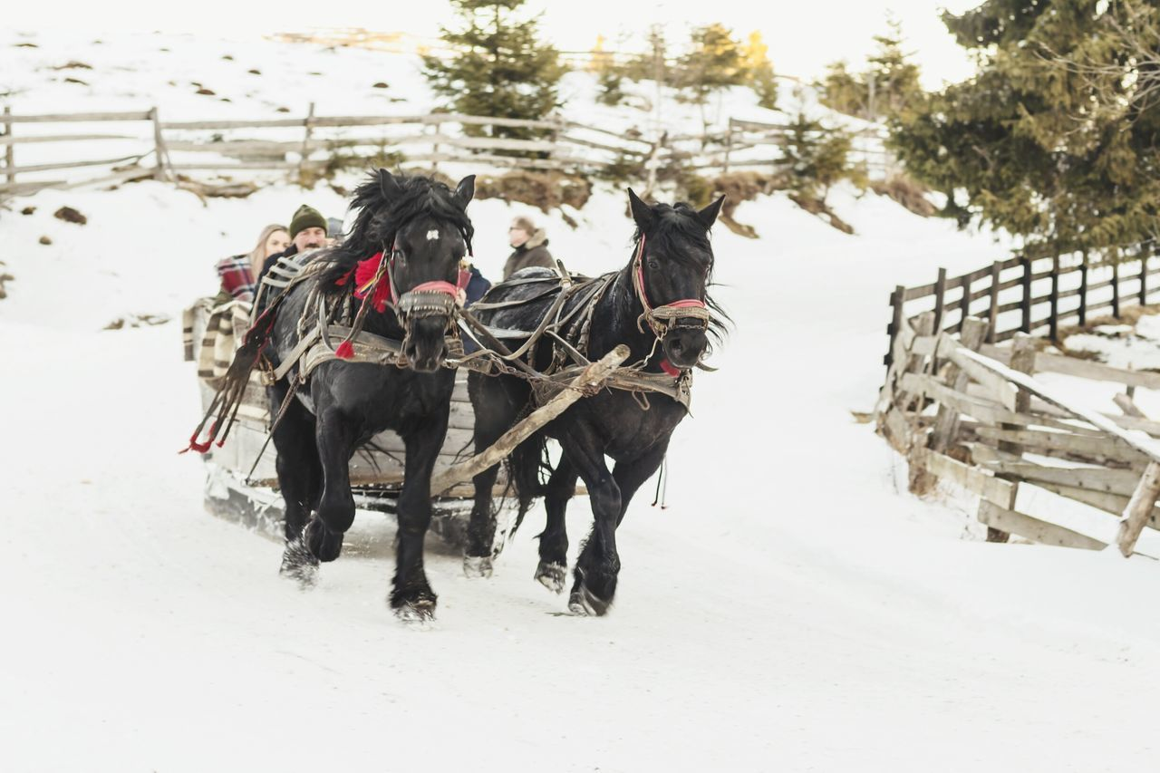 snow, cold temperature, winter, working animal, domestic animals, horse, animal themes, weather, mammal, nature, field, horse cart, two animals, white color, horsedrawn, outdoors, day, transportation, frozen, beauty in nature, no people