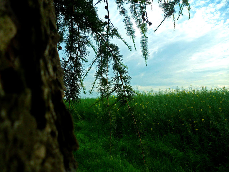Tree Nature Green Color Beauty In Nature No People Grass Outdoors Day Landscape Sky
