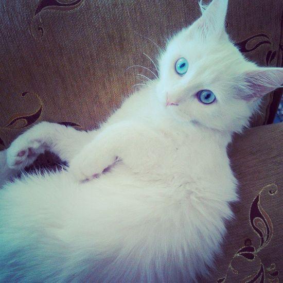 Evimizin Maskotu Beyaz :):)