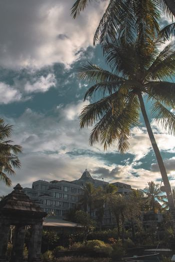 Tropical Scene Hotel Palmtree Hyattregency Tree Architecture Building Exterior Built Structure Plant Cloud - Sky Sky Nature Building Outdoors Low Angle View Travel Destinations