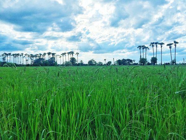 Moonsoon Paddyfield Mandalay Nostalgic Place
