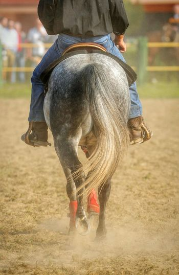 horse riding Horse Photography  Horse Tail Horseback Riding Horse Horses Horse Riding Horseriding Horseback Riding Horselove Back Riding Riding Horses Cowboy Rodeo Rodeo ❤ American Culture U.S.A Style EyeEm Best Shots EyeEm Best Edits Tail Wild West Ranch