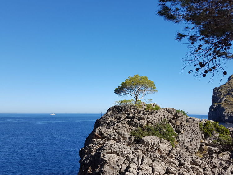Water Sea Tree Blue Beach Clear Sky Sky Horizon Over Water Close-up Pine Tree Rock Formation Evergreen Tree Scenics
