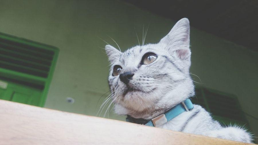 Close-up portrait of cat sitting on floor