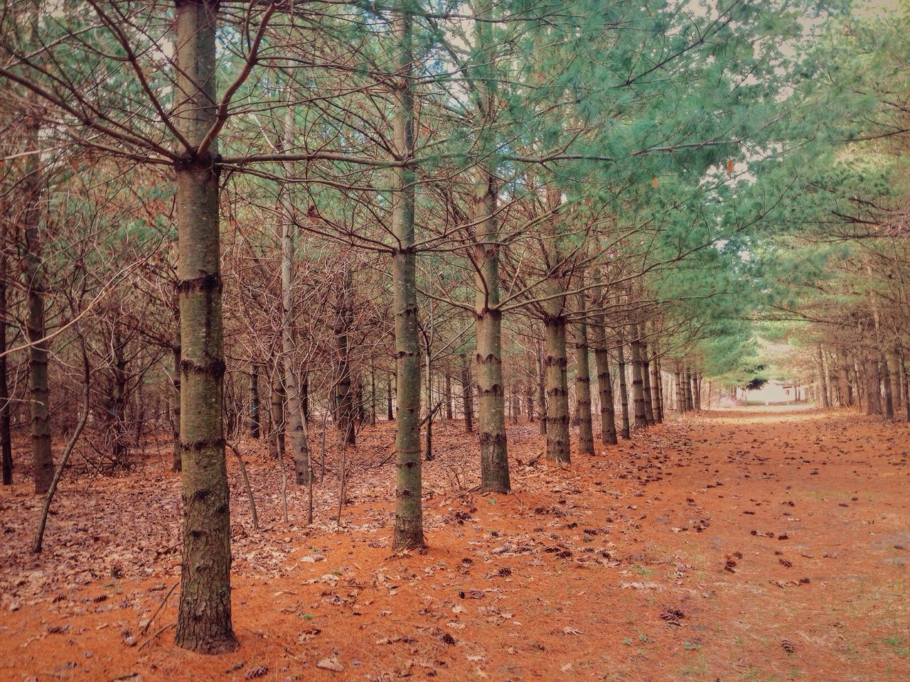 TREELINED FOOTPATH ALONG TREES