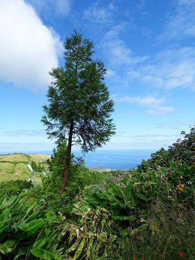 Landscape Tranquility Tranquil Scene Tree Water Sea Tree Area Blue Rural Scene Flower Beach Sky Horizon Over Water Single Tree Growing