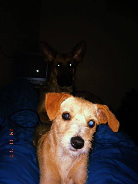 Babydogs Mammal Domestic Animals Pets Domestic Canine One Animal Dog People