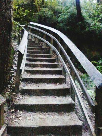 Nature Stairs