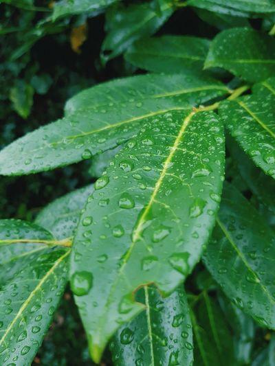 EyeEm Selects EyeEm Best Shots EyeEmNewHere EyeNatureLover Water Leaf Drop Wet RainDrop Close-up Green Color Plant Monsoon Water Drop Dew Torrential Rain Blade Of Grass Leaf Vein