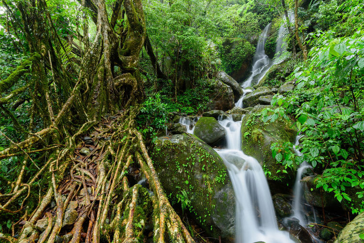 A waterfall beside a living root bridge in Meghalaya, India Tree Forest Plant Water Motion Scenics - Nature Beauty In Nature Waterfall Flowing Water Nature Environment Long Exposure No People Green Color Non-urban Scene Rainforest Flowing Outdoors Stream - Flowing Water WoodLand Root Bridge India Meghalaya Nongriat