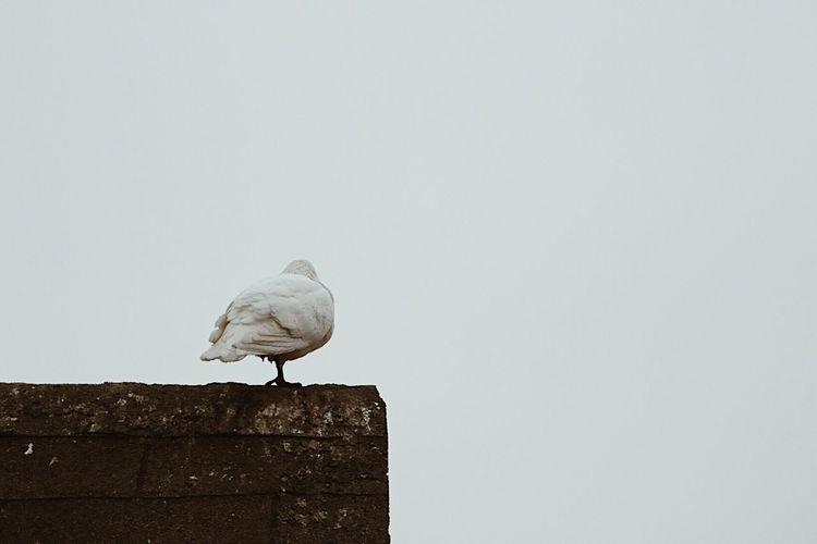 Bird perching on wall against sky