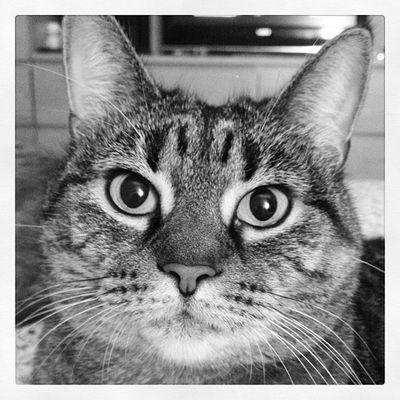 Riga. #iphoneography #jomo #cat Cat IPhoneography Jomo