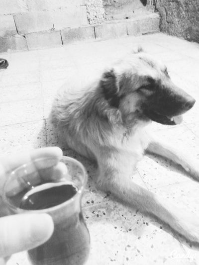 Tea Dog❤ Happyweekend Blackandwhite Black & White Black&white Dogs Sohbet Kanki Kankii