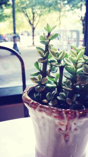 Interiors Florals Florals Cafe coolest shop