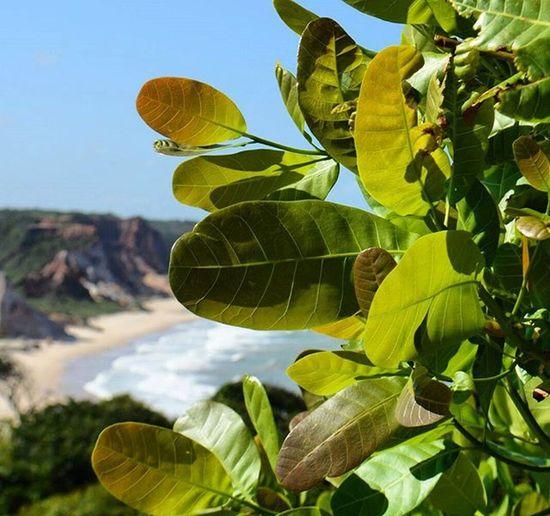 Photo Photooftheday Photographer Foto Fotografia Paraíba Brazil Tambaba Brasildosmeusolhos_ Natureza Nature Instalike Instaphoto Nofilter Tarde  Beach Ig_paraiba_ 🍃