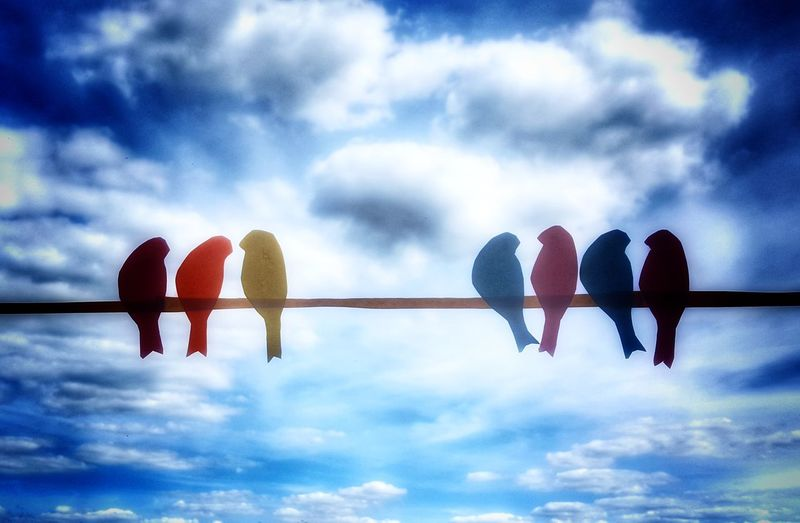Soft HDR Cloud - Sky Low Angle View Silhouette Togetherness Close-up Vignette Colors Diversity Birds
