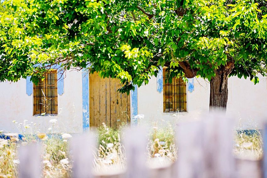 Tree House Fence Summertime Ibiza Paint Decay White Garden Blue Sky Sunshine Shallow Depth Of Field Pretty Cottage Holiday Strolling On A Hot Day