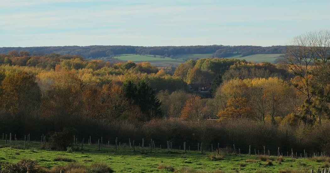 Pourrain Grainedenature Igersbourgogne Igersyonne Automne Yonne Bois Foret Arbres Nature Champs Yonnetourisme Bourgogne Agriculture Campagne Vert Ferme