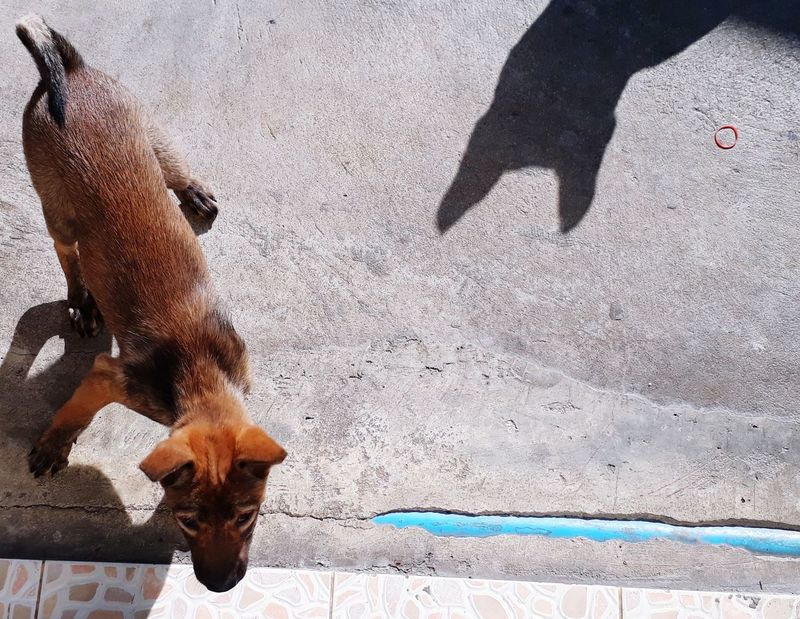 Thai dogs Thai Dogs Dogs EyeEm Selects Animal Themes Mammal Domestic Animals Day Outdoors One Animal Shadow
