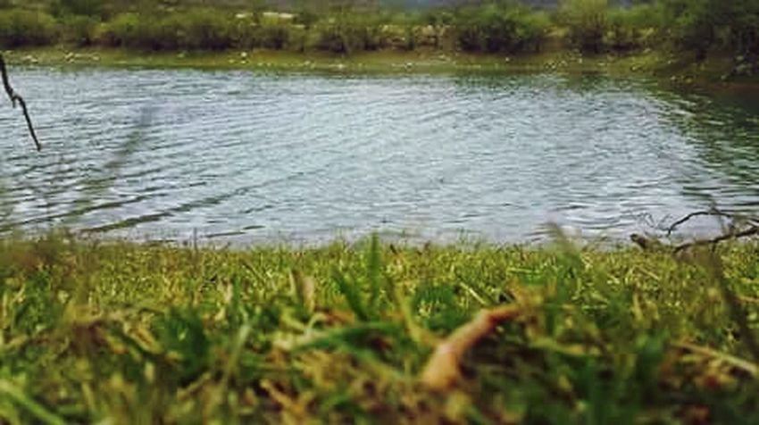 Plant Water Grass Green Color Lake Tranquility Beauty In Nature Tranquil Scene Nature No People Growth Scenics - Nature Outdoors Day Floating On Water Rippled Environment Idyllic